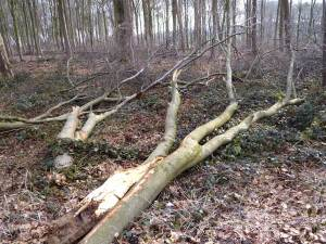 Sturmholz im Wald