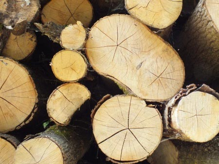 fichtenholz als brennholz f r den kamin. Black Bedroom Furniture Sets. Home Design Ideas