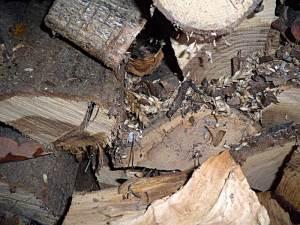 Rattennest im Brennholzstapel