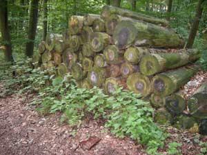 stammholz-gestapelt