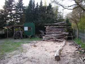 stammholz