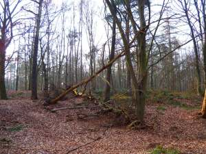 Totholz aus dem Wald
